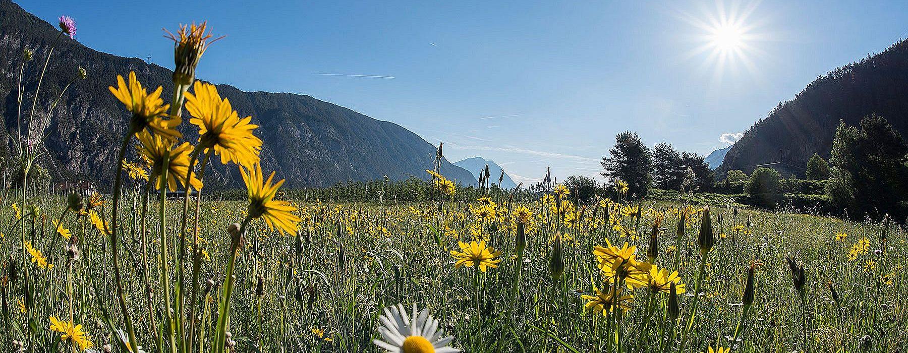 Flower meadow in the Ötztal